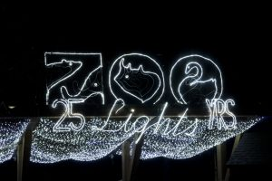 25 years of ZooLights at the Oregon Zoo. © Oregon Zoo / photo by Michael Durham.