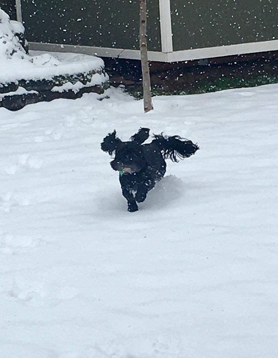 Isabella's Dog Gracie