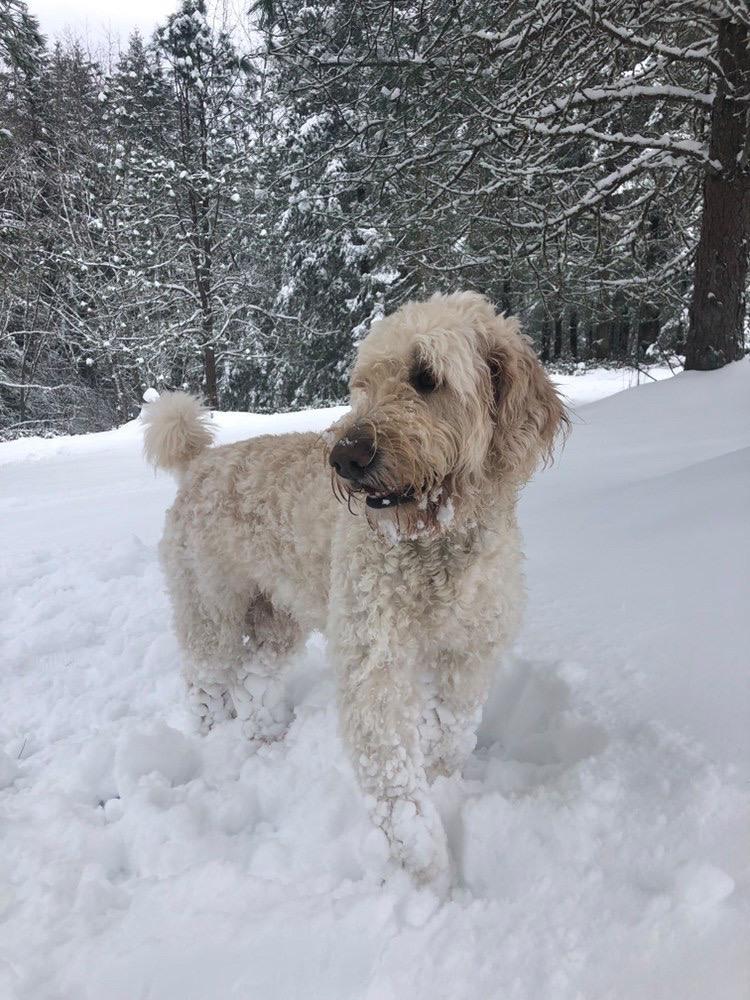Reagan's Dog Kobe