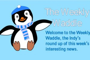 "Oswald the penguin is wearing a hat and scarf beside text that says, ""The Weekly Waddle, the Indy's round up of this week's interesting news."""